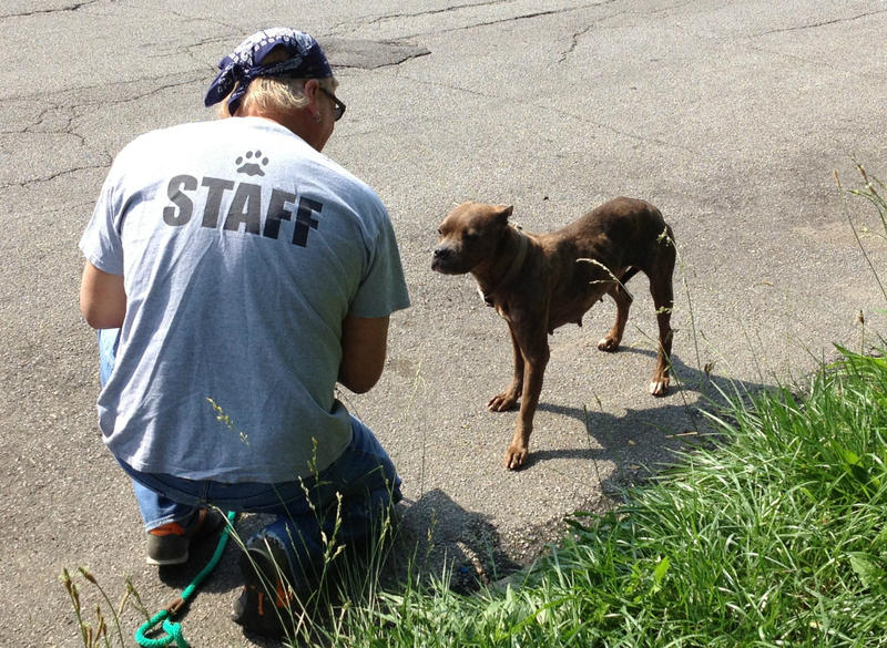 Randy Grim still goes out and rescues strays. Here he coaxes a terrier into trusting him. But the city's police force and health department have joined in the effort to reduce animal mistreatment.