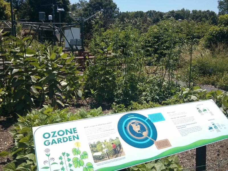 The ozone garden at Missouri Botanical Garden