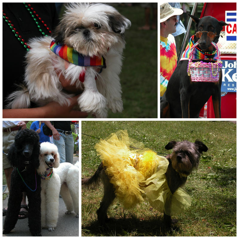 Dogs at Pride Fest events before 2013