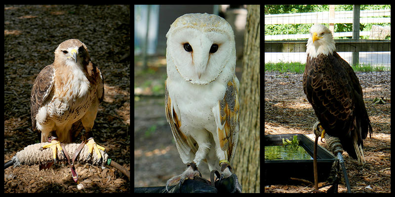 The World Bird Sanctuary is home to over 200 animals.