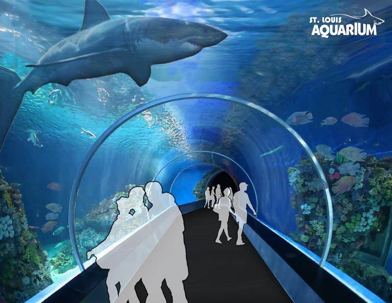 The St. Louis Aquarium's main attraction will be  a 385,000-gallon shark tank.