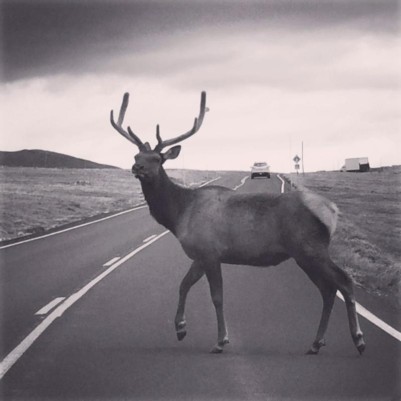 Becky Vollmer emailed this photo she took earlier this summer in Rocky Mountain National Park.