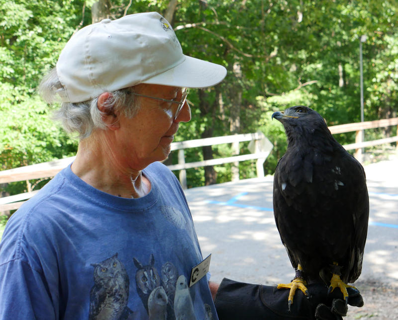 Visitor with hawk.