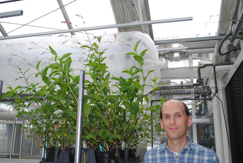 Dr. Noah Falgren, pictured with Japanese Indigo, leads the bioinfomatics facility at the Donald Danforth Plant Science Center.