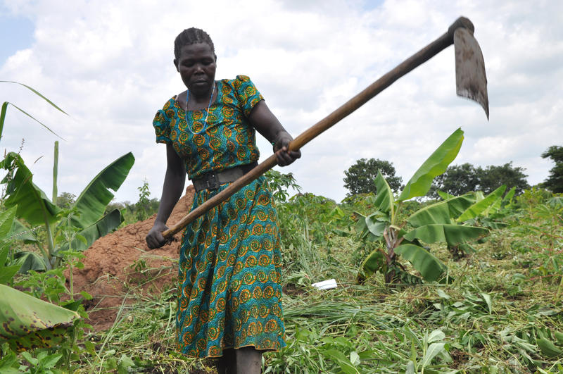 Christine Anyeko, a laborer in Uganda's northern Amuru district, weeds a field of cassava, banana and beans by hand.