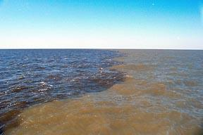 A dead zone with sediment from the Mississippi River carries fertilizer to the Gulf of Mexico.