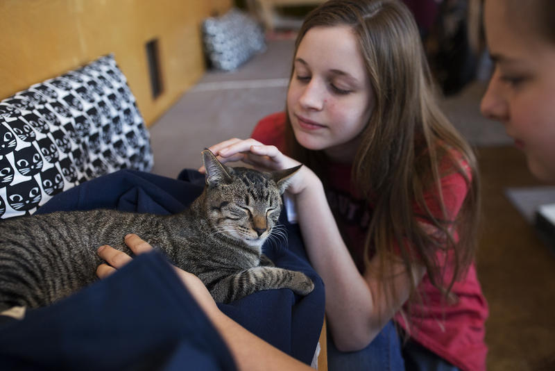 Gianna Ceriotti and Emily Catanzaro pet Paul during a recent visit to Mauhaus Cat Café in Maplewood. (Dec. 7, 2016)
