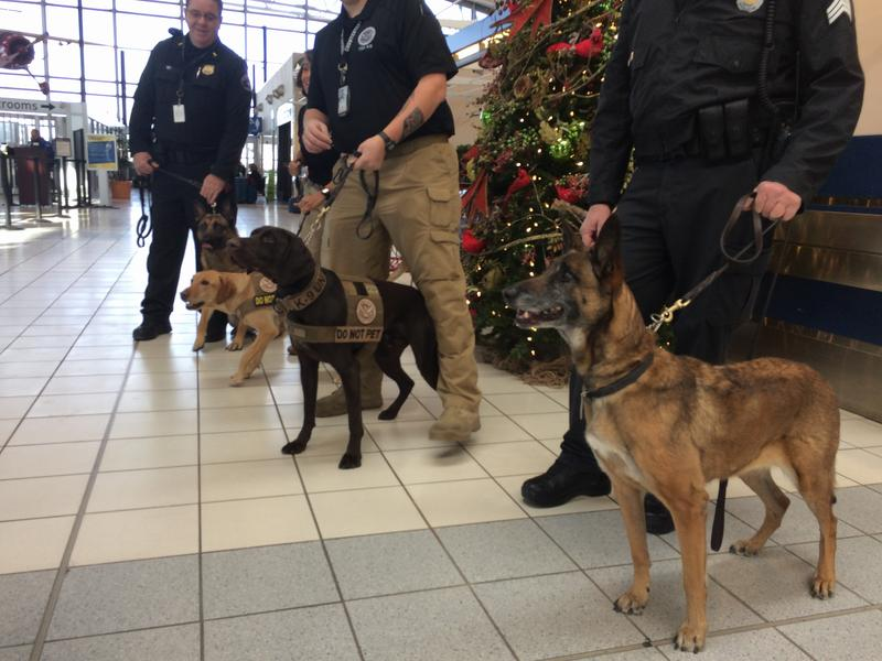 Photo of three dogs and their handlers at Lambert Airport.