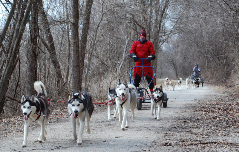 Richie Camden and Dominic Rekart take the Breakaway Siberians dog sled team  out for a practice run on the Katy Trail near Weldon Spring, Mo., in January 2017.