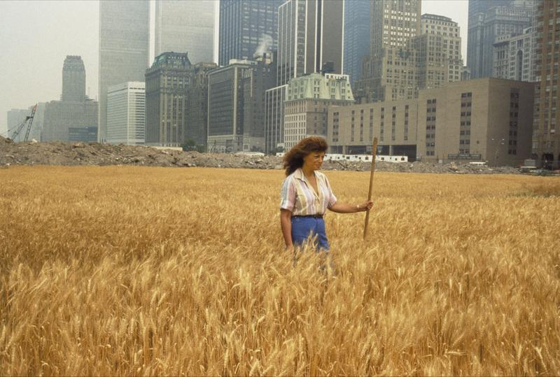 The artist Agnes Denes stands in the middle of a wheat field she planted in a landfill.