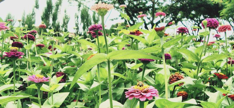 On Wednesday's St. Louis on the Air, we'll discuss spring and summer gardening tips and tricks.