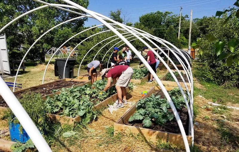 "Good Life Growing operates 20 ""hoop houses,"" which are a kind of greenhouse."