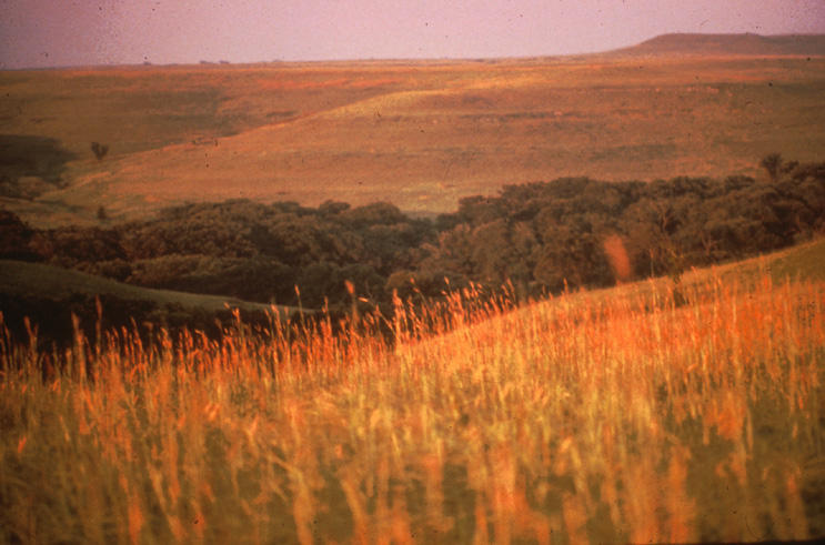 A prairie that contains the common big bluestem grass.
