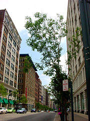 A view down Washington Avenue. 2008. 300 pixels