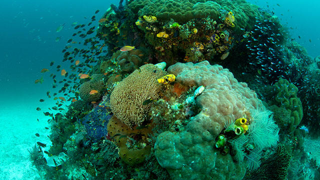 The coral reefs of West Papua, which are more diverse than any other marine ecosystem on Earth.