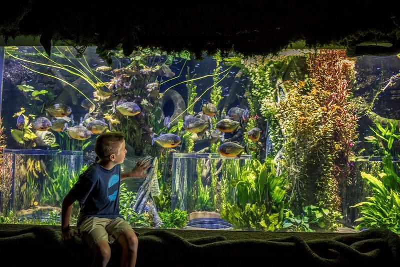 The 1.5-million-gallon aquarium opened in September 2017, featuring about 800 different species of fish, mammals, reptiles, amphibians and birds.