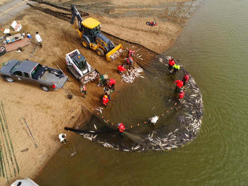 An aerial shot of wildlife officials from the U.S. Fish and Wildlife Service and the Missouri Department of Conservation removing Asian carp from Creve Coeur Lake in winter 2018.