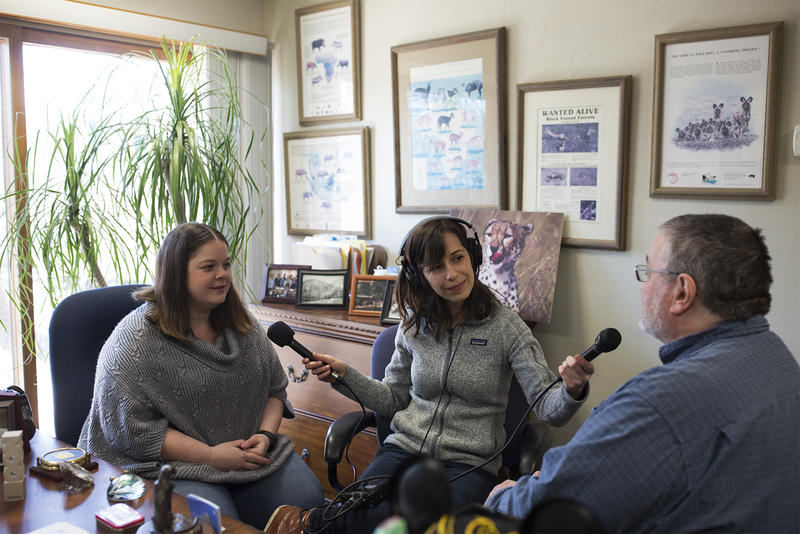 Curious Louis question-asker Rachel Duncan, left, and St. Louis Public Radio reporter Shahla Farzan, center, speak with Bill Houston of the Saint Louis Zoo.