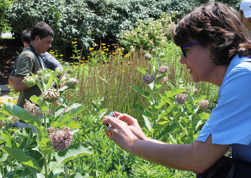 Eileen Graessle, right, photographs a honeybee on a milkweed flower at the BeeBlitz in Forest Park on June 16, 2018.