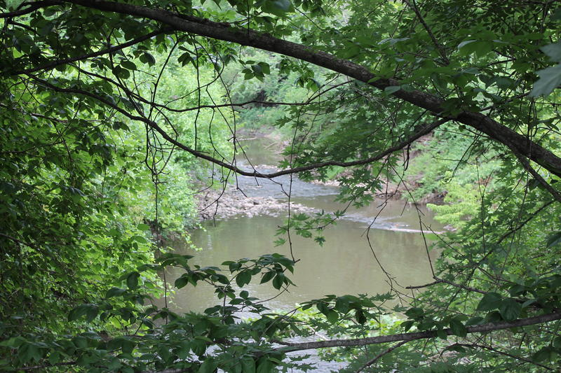 Coldwater Creek in north St. Louis County has been linked to increased cancer risk, thanks to radioactive waste that contaminated the creek bed.