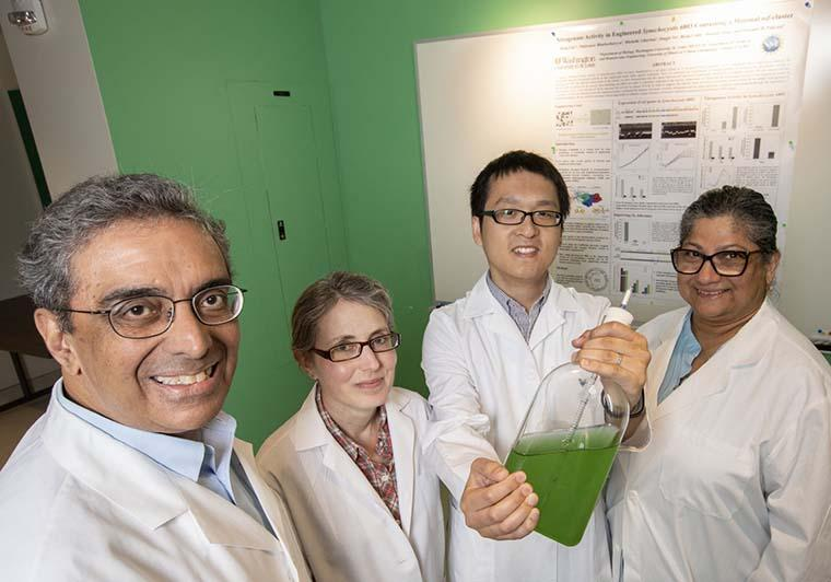 Washington University biologists holding a glass jar containing bacteria that have been engineered to use nitrogen from the atmosphere to help it grow.