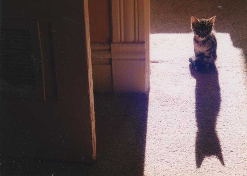 Photo of cat and shadow