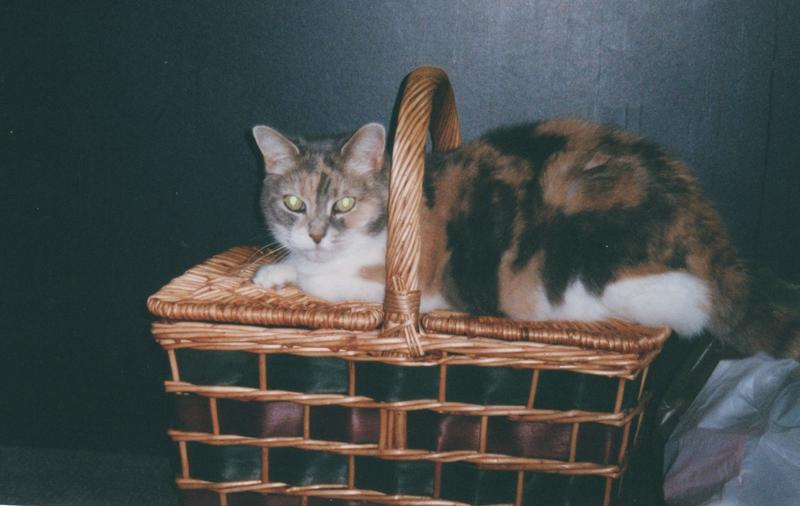 Kelly, a calico cat, lived in Lafayette Square