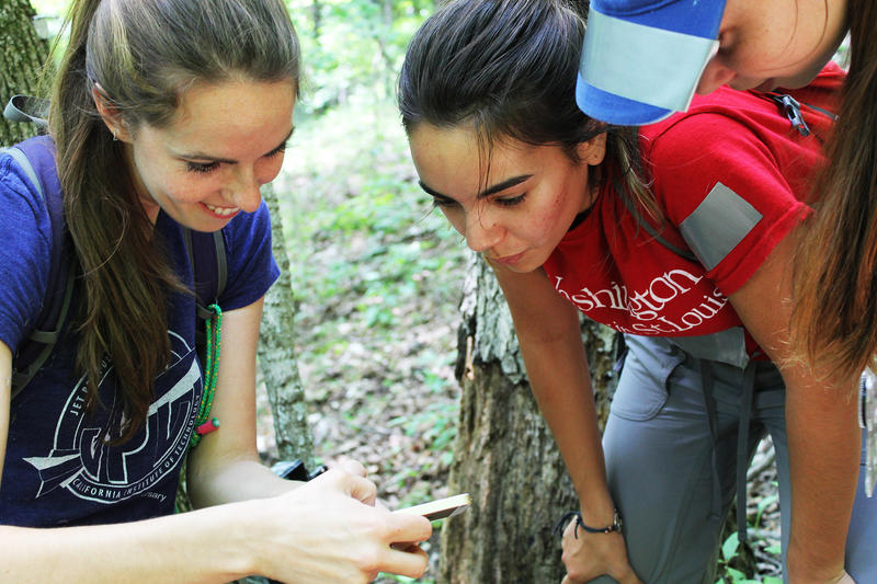 Tyson scientist Solny Adalsteinsson, left, helps Wash U sophomore Olivia Arias, center, and Webster Groves High School senior Julia Berndt check the photos on a motion-triggered wildlife camera on July 27, 2018.