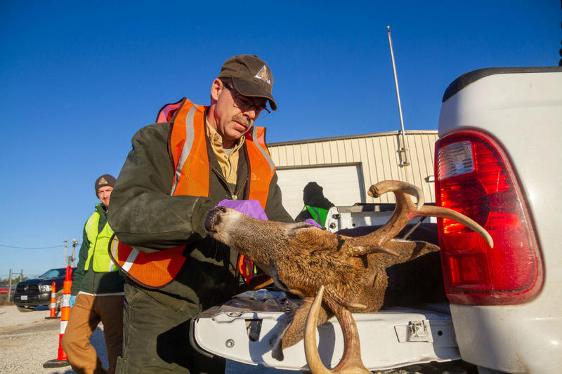 Missouri Department of Conservation staff in Weldon Spring test a deer for chronic wasting disease. Nov. 10, 2018