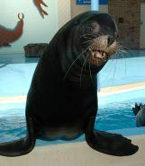 Alex the sea lion