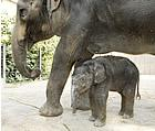 Ellie had her daughter Maliha at the St. Louis Zoo on August 2, 2006.