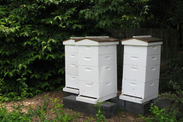 "These honey bee hives are located at the Missouri Botanical Garden in St. Louis. MOBOT is one of several local partners participating in ""The Great Missouri Buzz Off."""