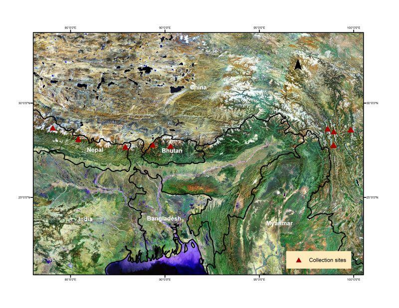 The red triangles on this map represent Salick's climate change research plots, which are located along a 2,000 km transect across the Himalayas in Nepal, Bhutan and Tibetan China.