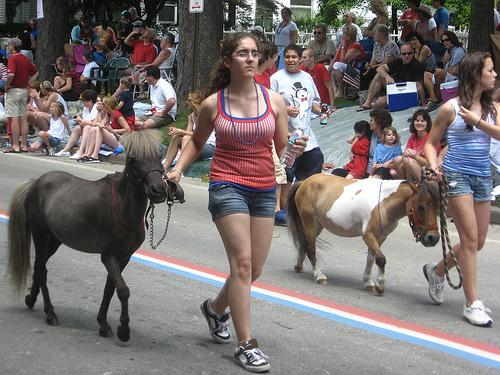 Miniature horses in a parade in Rhode Island. Miniature horses may become approved service animals in Illinois.