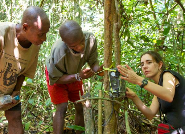 Crickette Sanz (at right) and Congolese researchers configure a remote camera. The camera will allow the researchers to study the primates in their natural habitats without influencing their behaviors.