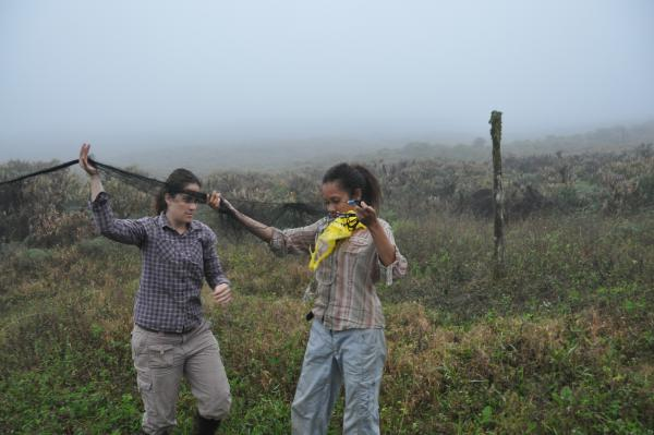 Samoa helps Mari extend a mistnet at Media Luna. They often work together in the field.