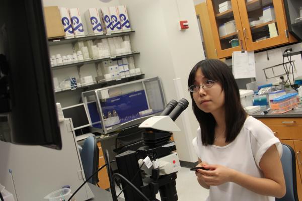 Yinzi Liu studies zebrafish embryos in a Washington University lab.