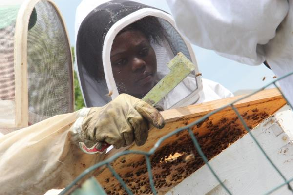 Dejah Cox tends to Sweet Sensations bee hives that are located on a vacant lot in north St. Louis.