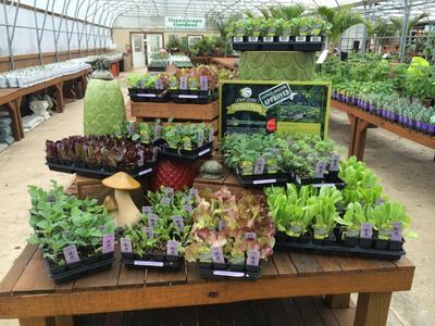 Local gardening hacks help green St. Louis region | St. Louis Public ...