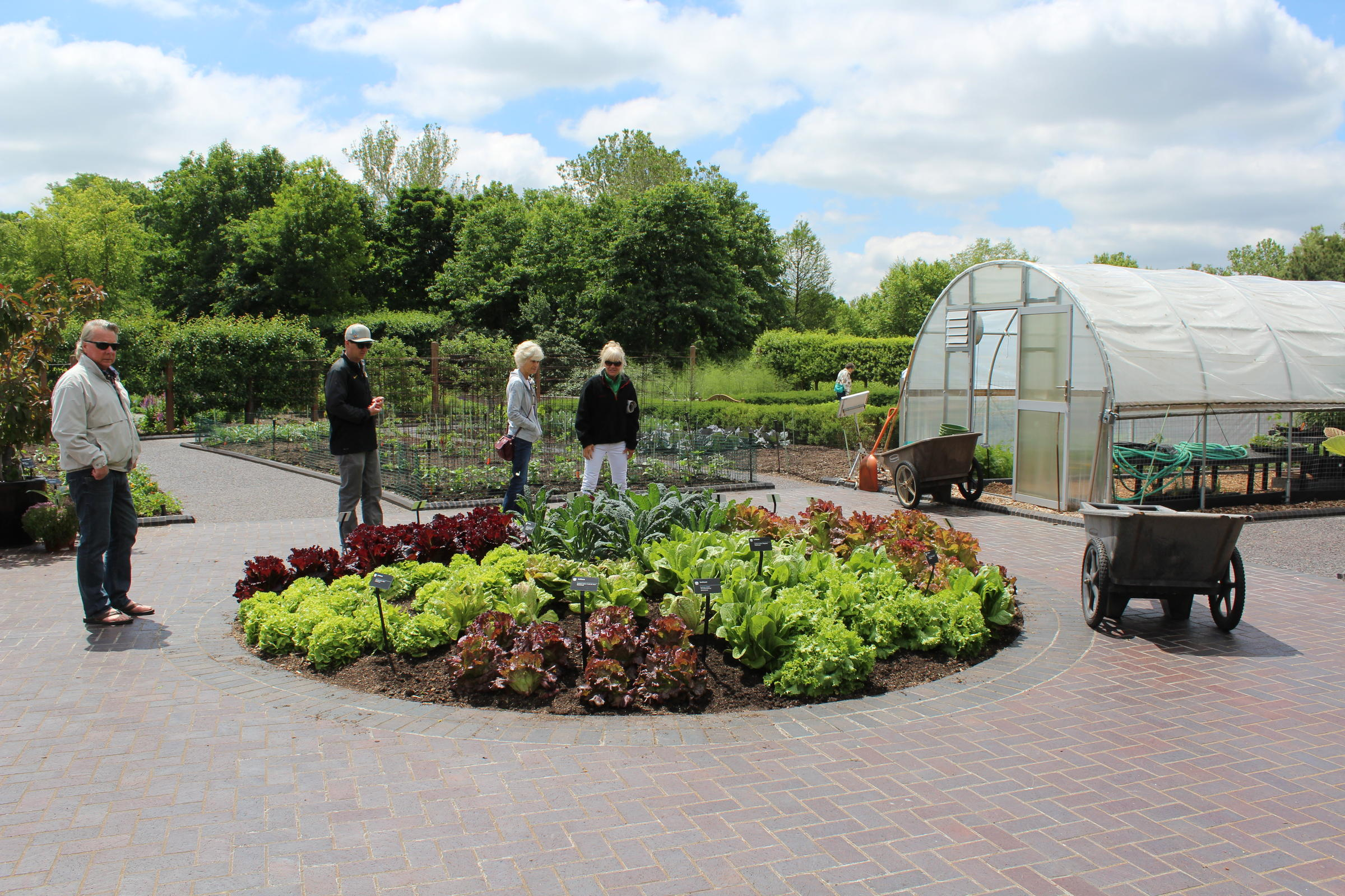 Different Varieties Of Lettuce Are On Display At One Of The Missouri  Botanical Gardenu0027s Demonstration Gardens.