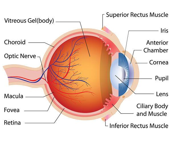 steroid eye drops