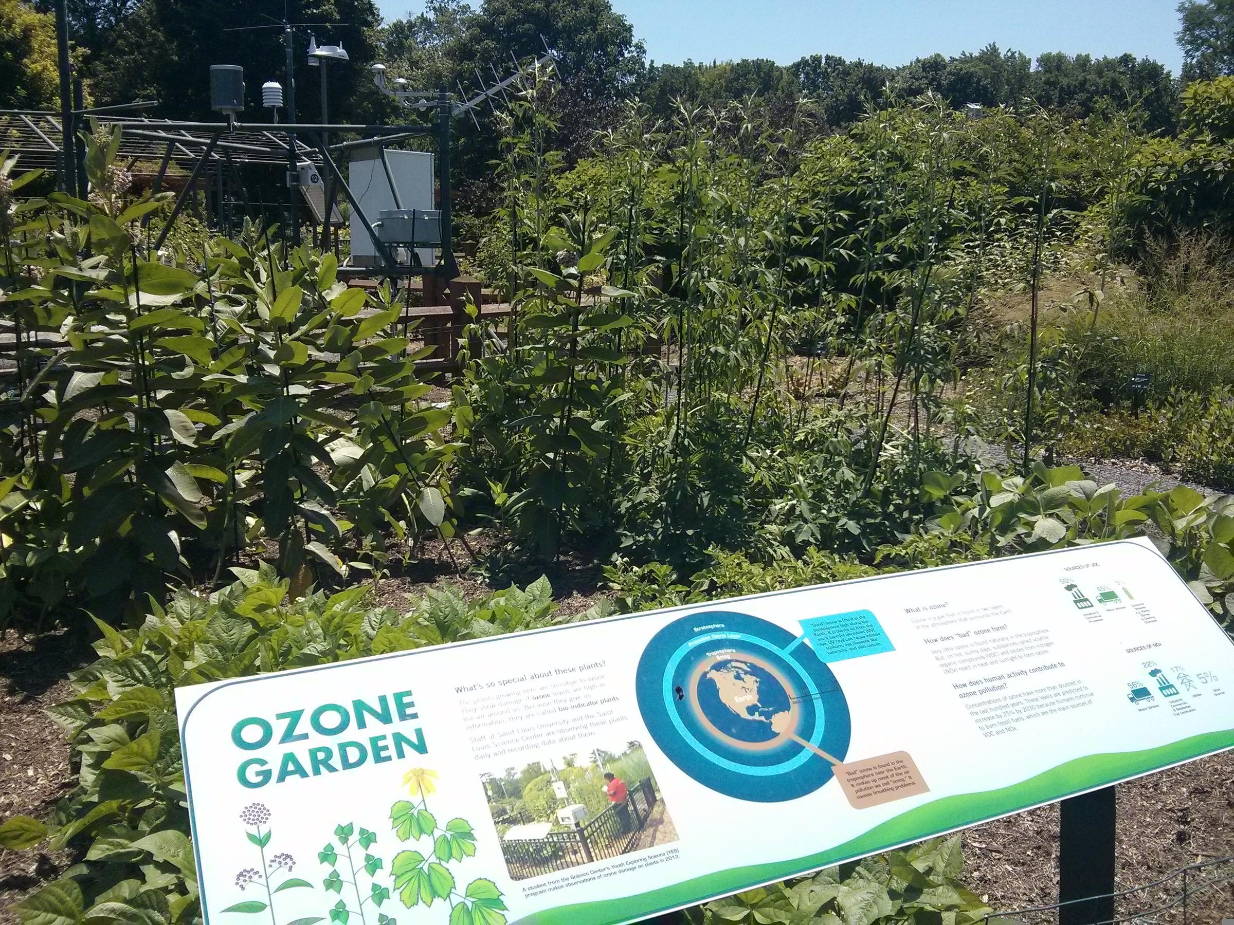 SLU researchers build displays to show how ozone affects plants