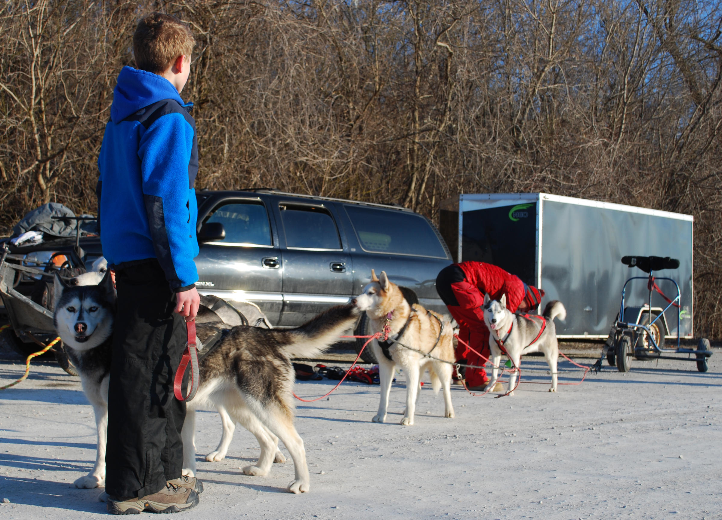 Dominic Rekart, 13, Helps Richie Camden Hitch The Breakaway Siberians Sled  Dog Team To A Wheeled Cart