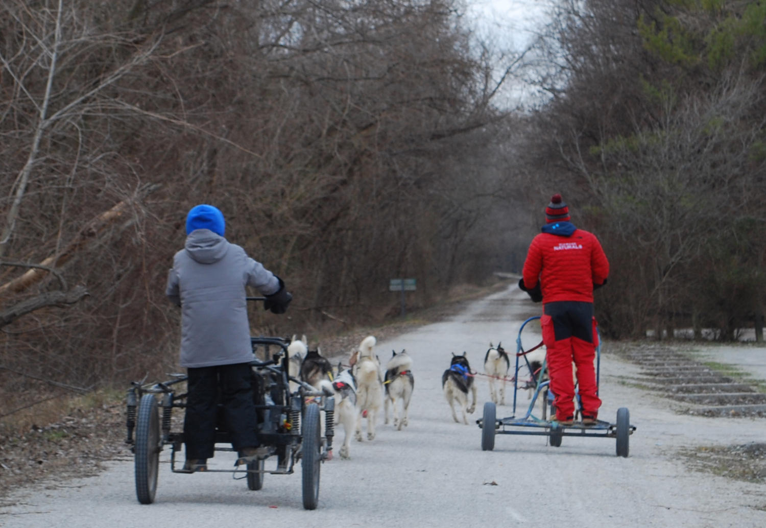 Unlikely Tale Meet The Rescued Huskies Who Practice For Sled Dog Snow Hd Wiring Harness In Fall And Winter Breakaway Siberians Team Trains Several Times A Week On Katy Trail Near Weldon Spring