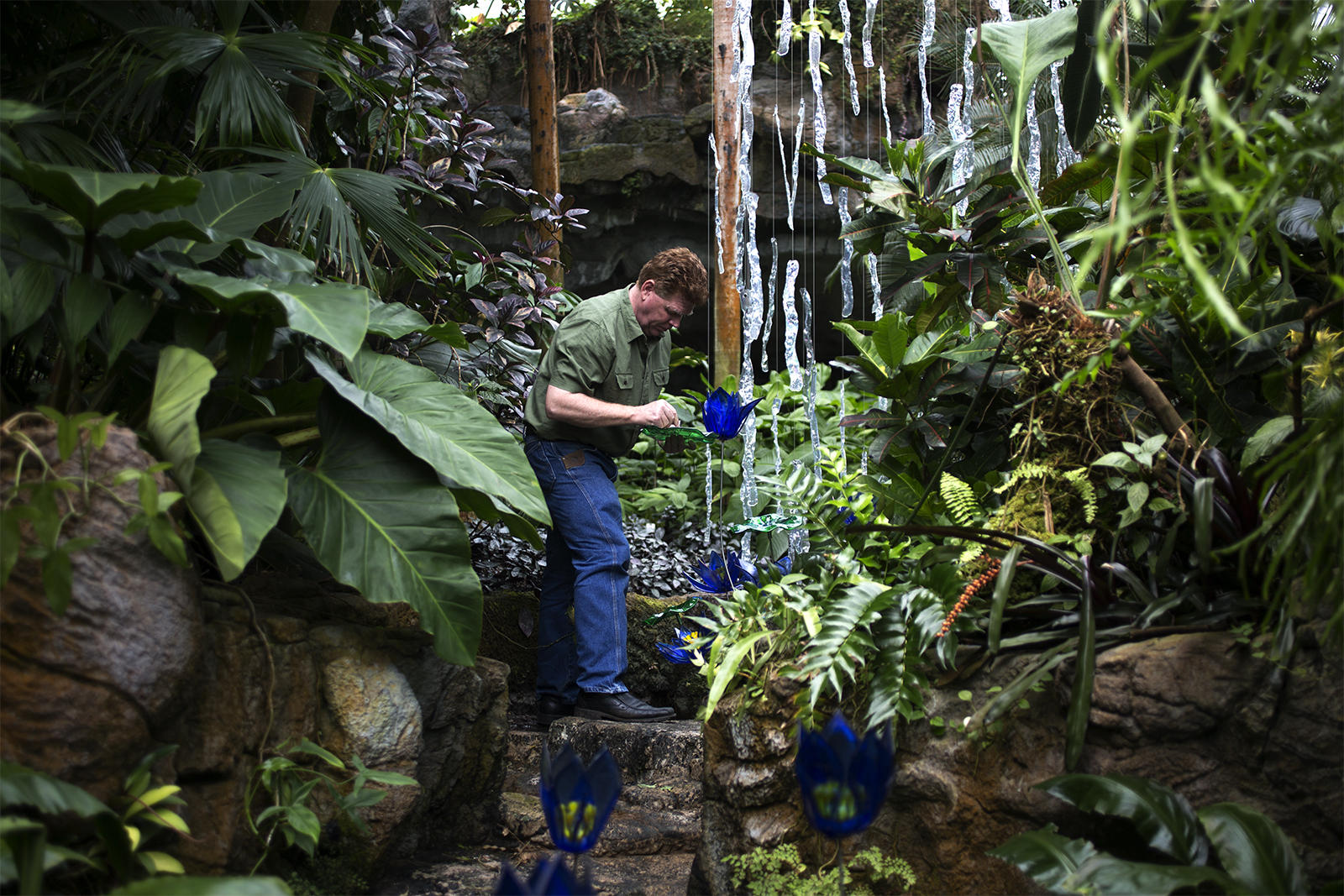 craig mitchell smith adjusts a glass flower on one of his larger pieces inside the climatron at the missouri botanical garden - Missouri Botanical Garden Hours