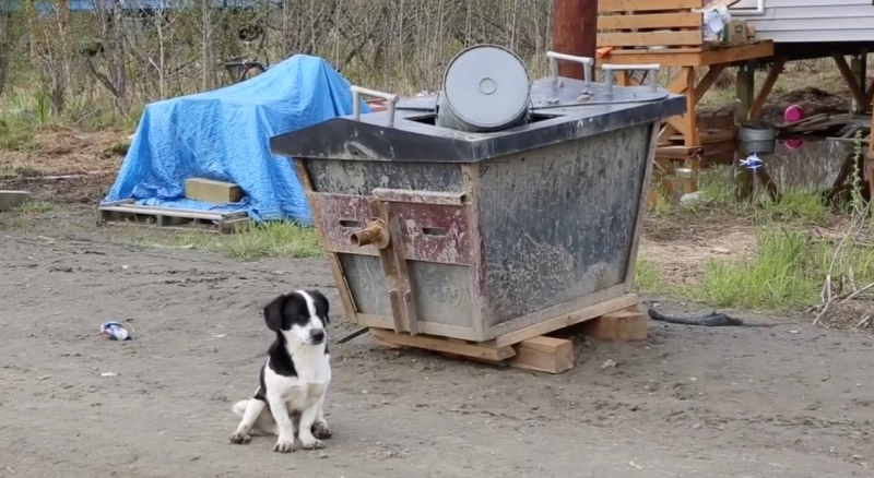 A dog sits by emptied honey buckets in Kwethluk.