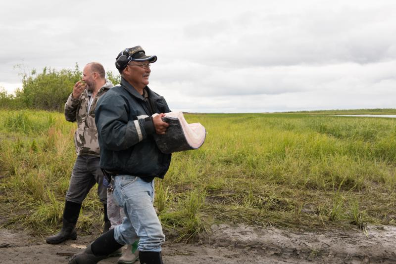 Willie John of Bethel, hauls a slice of whale blubber to his boat on July 29, 2017 in Napaskiak. People from up and down the river traveled to Napaskiak to help salvage and butcher the whale and collect blubber and meat.
