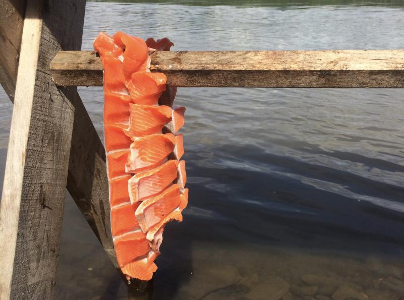 Fresh cut red salmon hangs by the Kuskokwim River in Sleetmute.