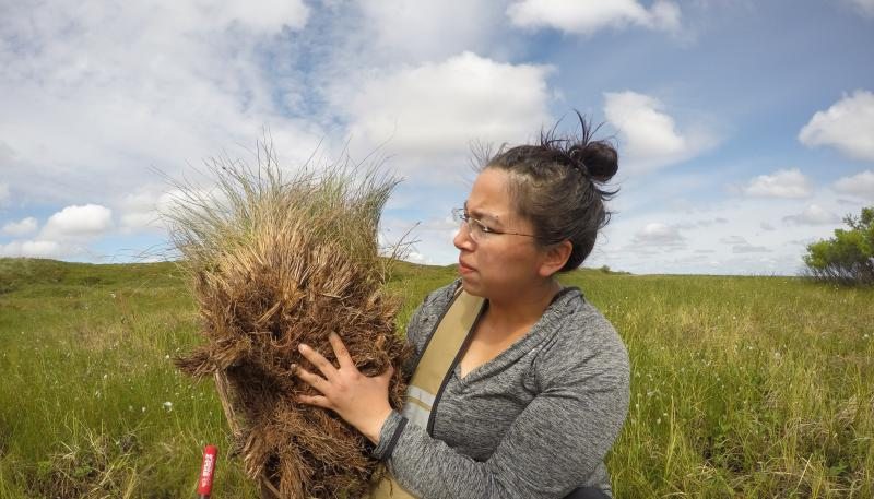 Jasmine Gil examines a tussock from a partially drained lake that was removed by a muskox using the area as a sanctuary to cool down from the summer heat.