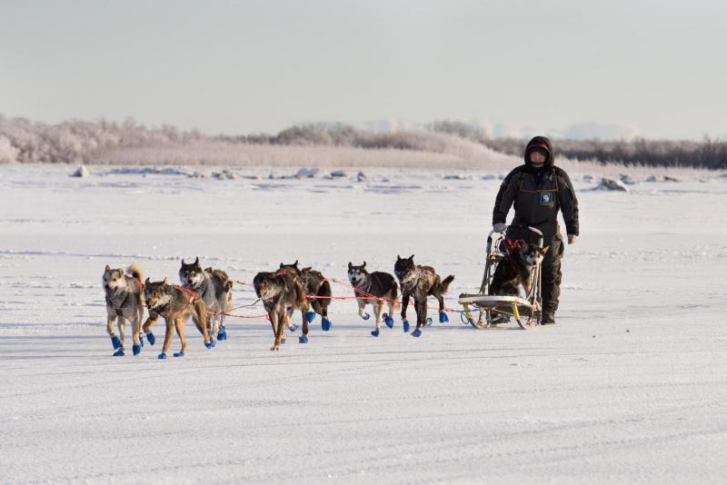 Mike Williams Jr. of Akiak crossed the finish line in first place at the Holiday Classic Dog Sled Race on January 8, 2016 in Bethel.